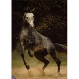 Horses Collection - Dark Horse - puzzle