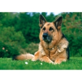 DOGS COLLECTION - German Shepherd Dog - puzzle